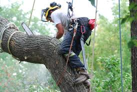 Tree Removal Service Lake Elsinore CA